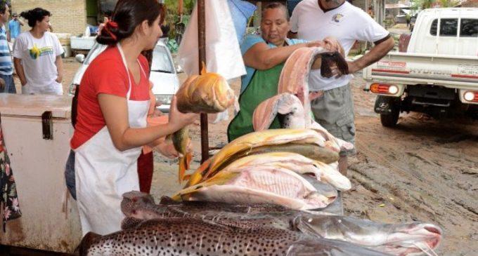 Hoy inicia veda pesquera