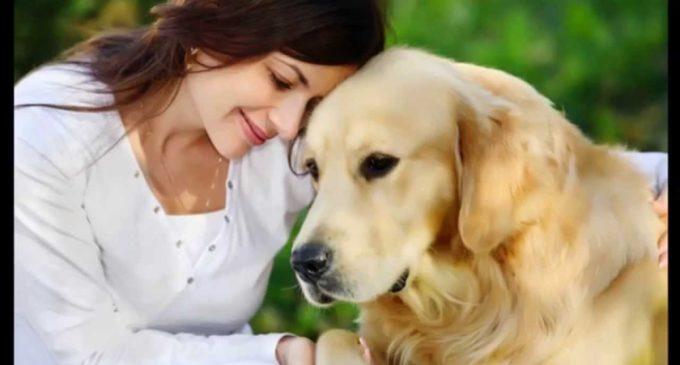 Quieren crear aparato que traduzca lenguaje canino