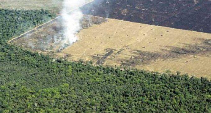 """Sequía en Boquerón: """"El Chaco está siendo deforestado, esa es la causa"""""""