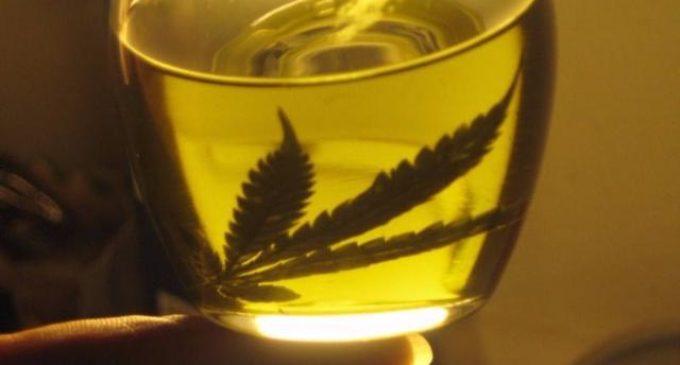 Tratan proyecto de investigación de la marihuana para su uso medicinal