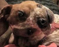 La foto viral del perro que nadie entiende