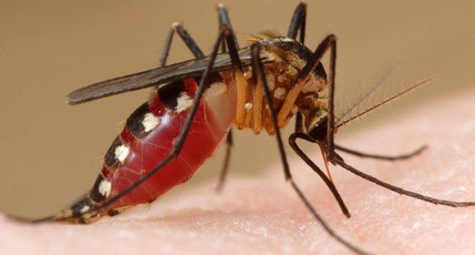 Conocé los síntomas y estate alerta ante el peligro de la Chikungunya