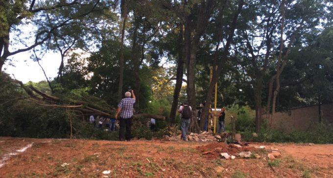 Denuncian tala de árboles en el Parque Pavetti