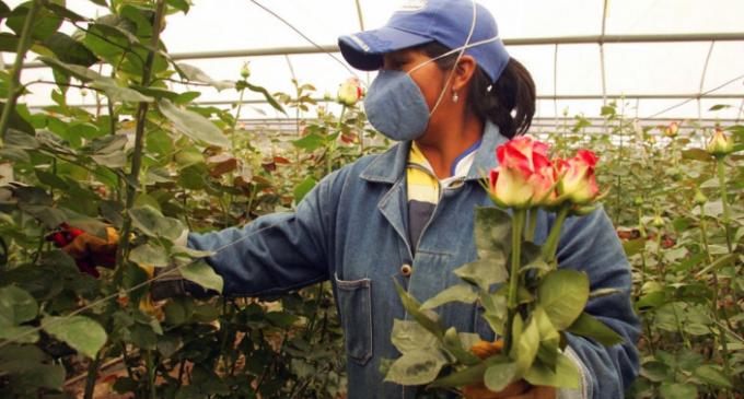 Oportunidad laboral en florerías