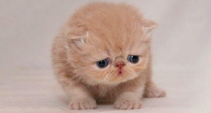 ¿Chau a Grumpy Cat?