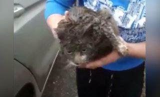 VIDEO: Una gata viaja más de 100 kilómetros debajo de un auto