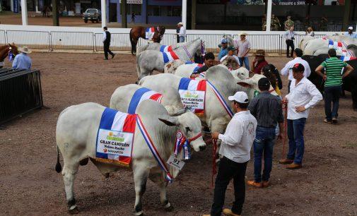 Este fin de semana culmina la 20ª Expo Canindeyú