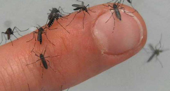Confirman cinco casos de chikungunya en Pedro Juan