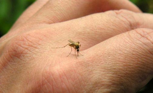 El Chikungunya puede pasar por tres etapas, pero no se repite