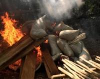 Incautan y queman más de 200 toneladas de marihuana en Amambay