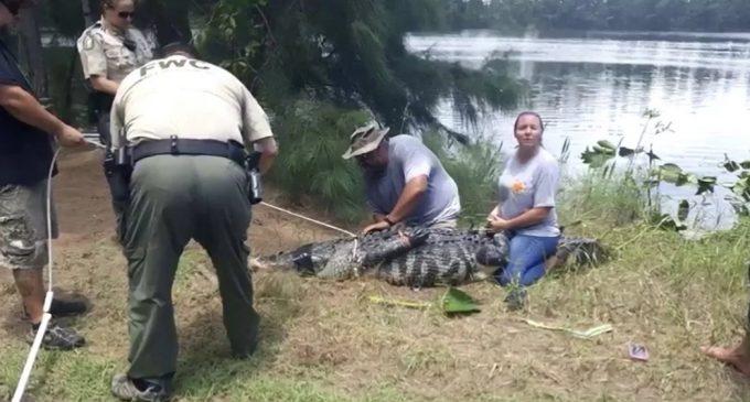 Policía encontró el brazo de una mujer desaparecida dentro de un cocodrilo