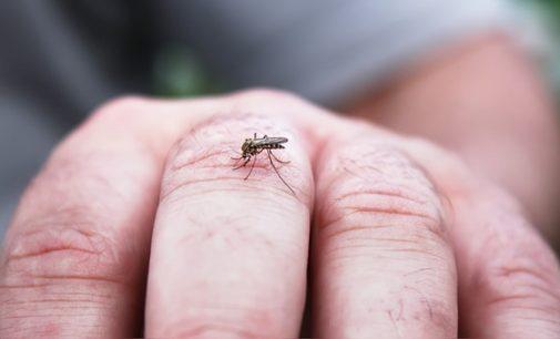 Advierten que el frío no frena la reproducción del Aedes, la eliminación de criaderos sí