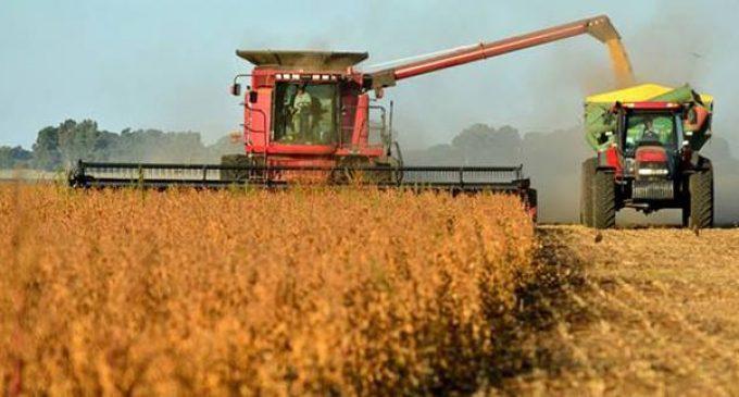 Preocupación por caída estrepitosa del precio de la soja