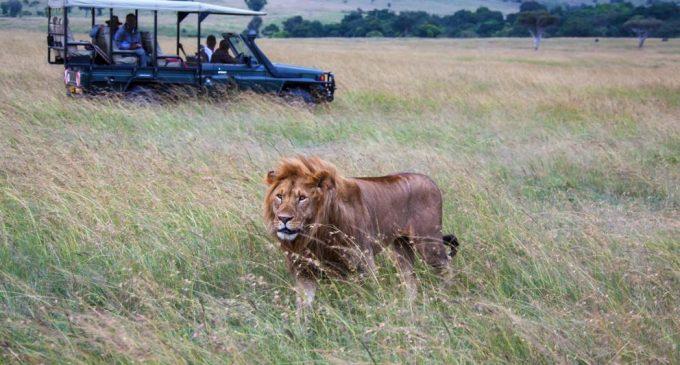 Cazadores de rinocerontes fueron devorados por leones