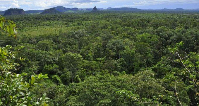 Gobierno deroga decreto que daba vía libre a deforestación