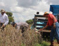 Gremios afirman que incremento del impuesto a la soja pagarán productores, no exportadores