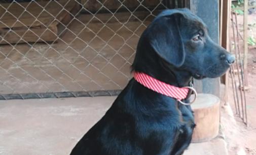 Lea, una perra que hará historia en Paraguay