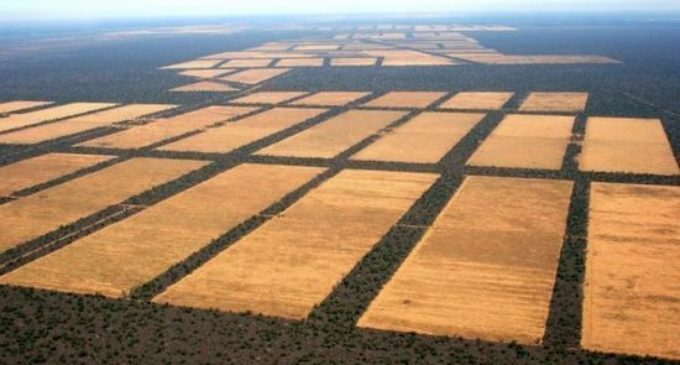 Paraguay, el segundo mayor país en deforestación del mundo