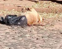 Jennifer Ruiz Díaz indignada por el abandono de un perro en la vía pública