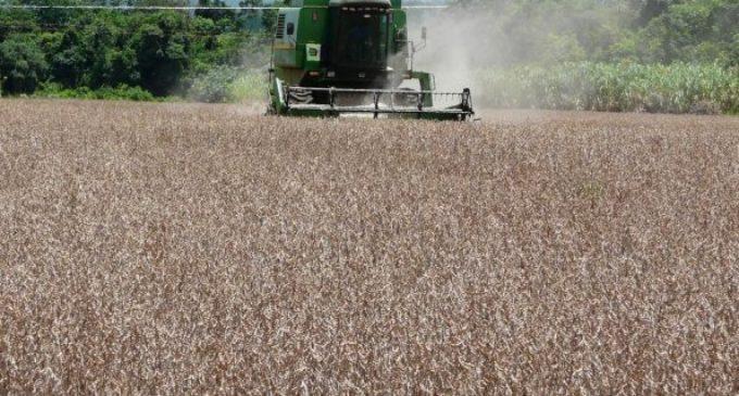 Se registra fuerte caída de exportación de soja