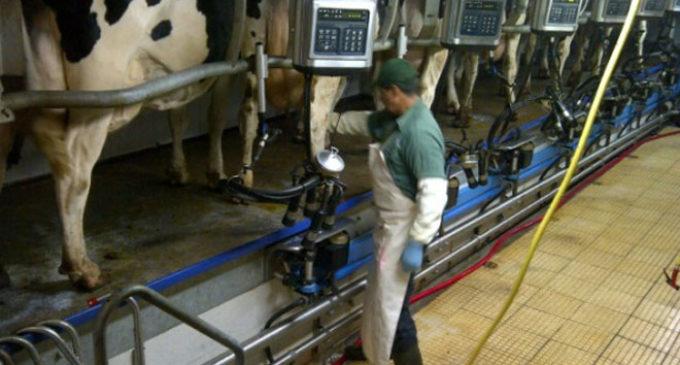 Alimentación escolar inyecta cerca de USD 20 millones a productores lácteos