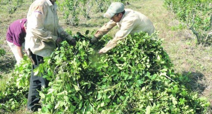Pequeños productores de yerba se manifiestanpor pocas ventas