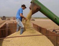 Senado rechazó aumento del impuesto a la exportación de soja