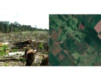 INFONA anuncia plataforma pública para monitoreo de bosques