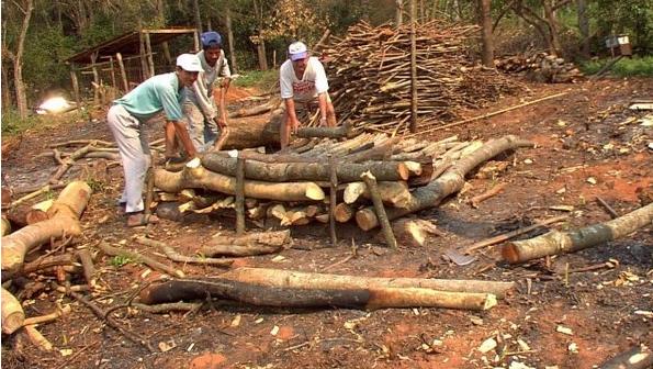 Preocupa probable extinción total de bosques en Paraguay