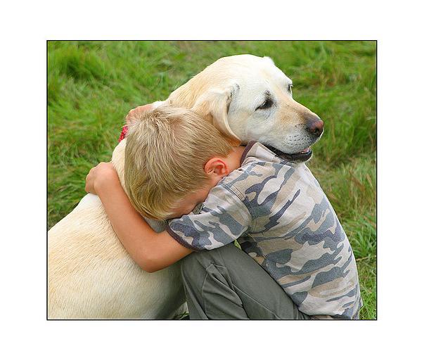 ¿Por qué perder a un perro puede ser tan duro como la pérdida de un familiar?