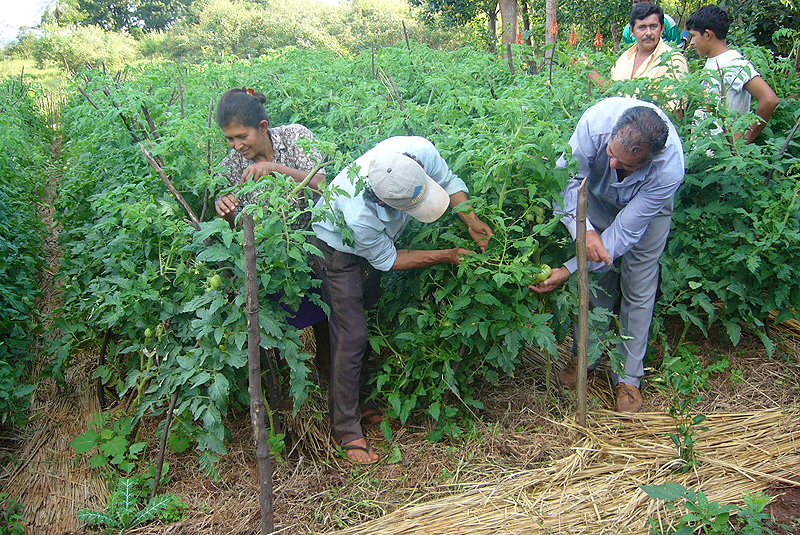 Agricultura familiar afectada por falta de lluvias apeligra producción de auto consumo