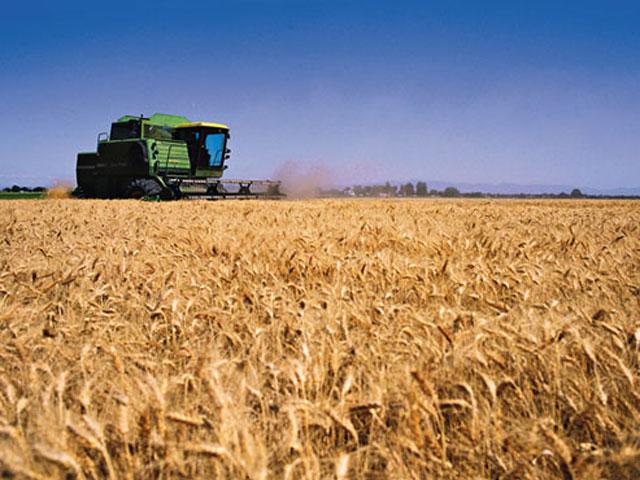 Productores de trigo resaltan futura buena cosecha pese a frío