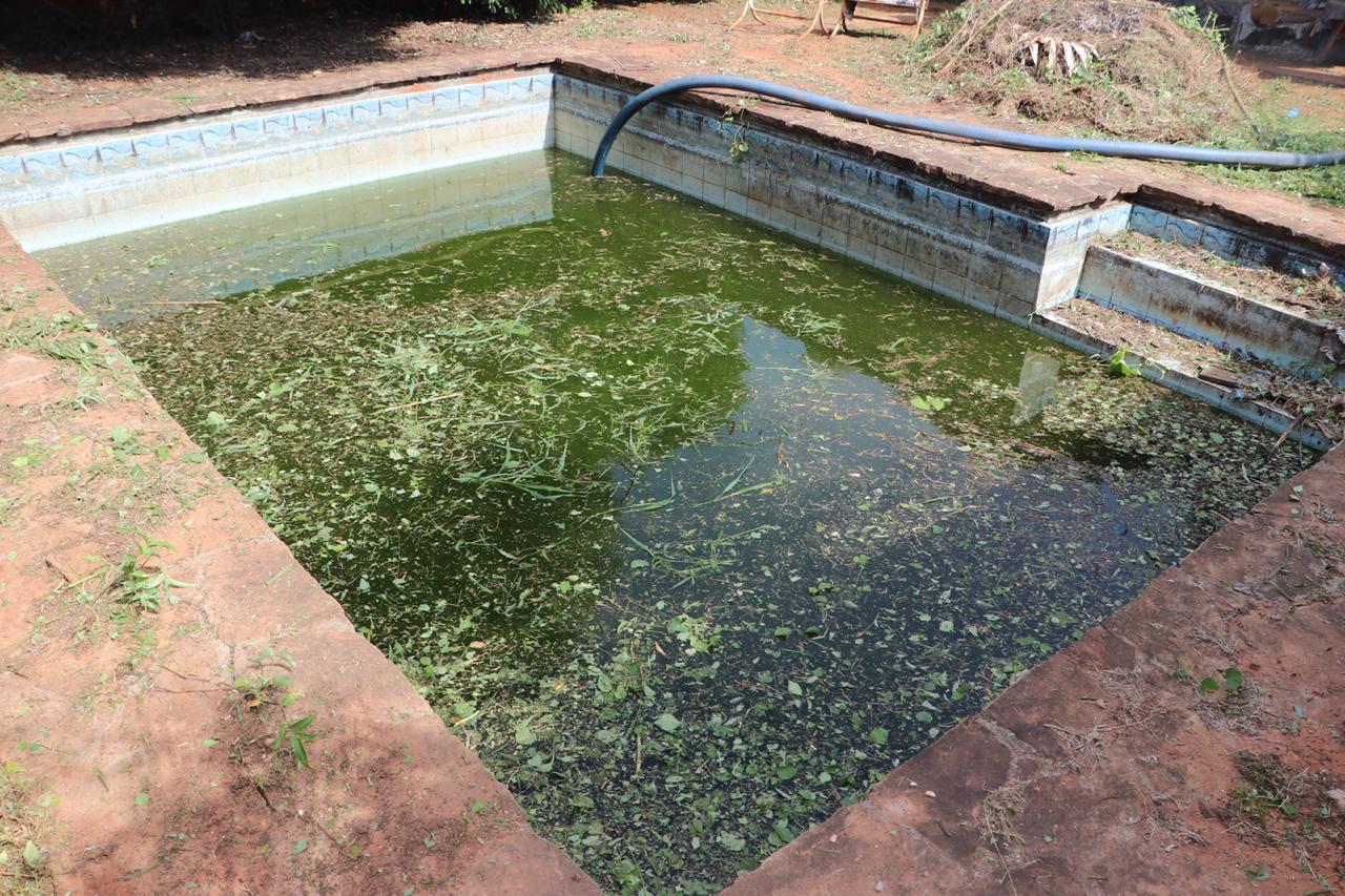 Fiscalía interviene tres casas en Lambaré denunciadas por acumulación de posibles criaderos de dengue.
