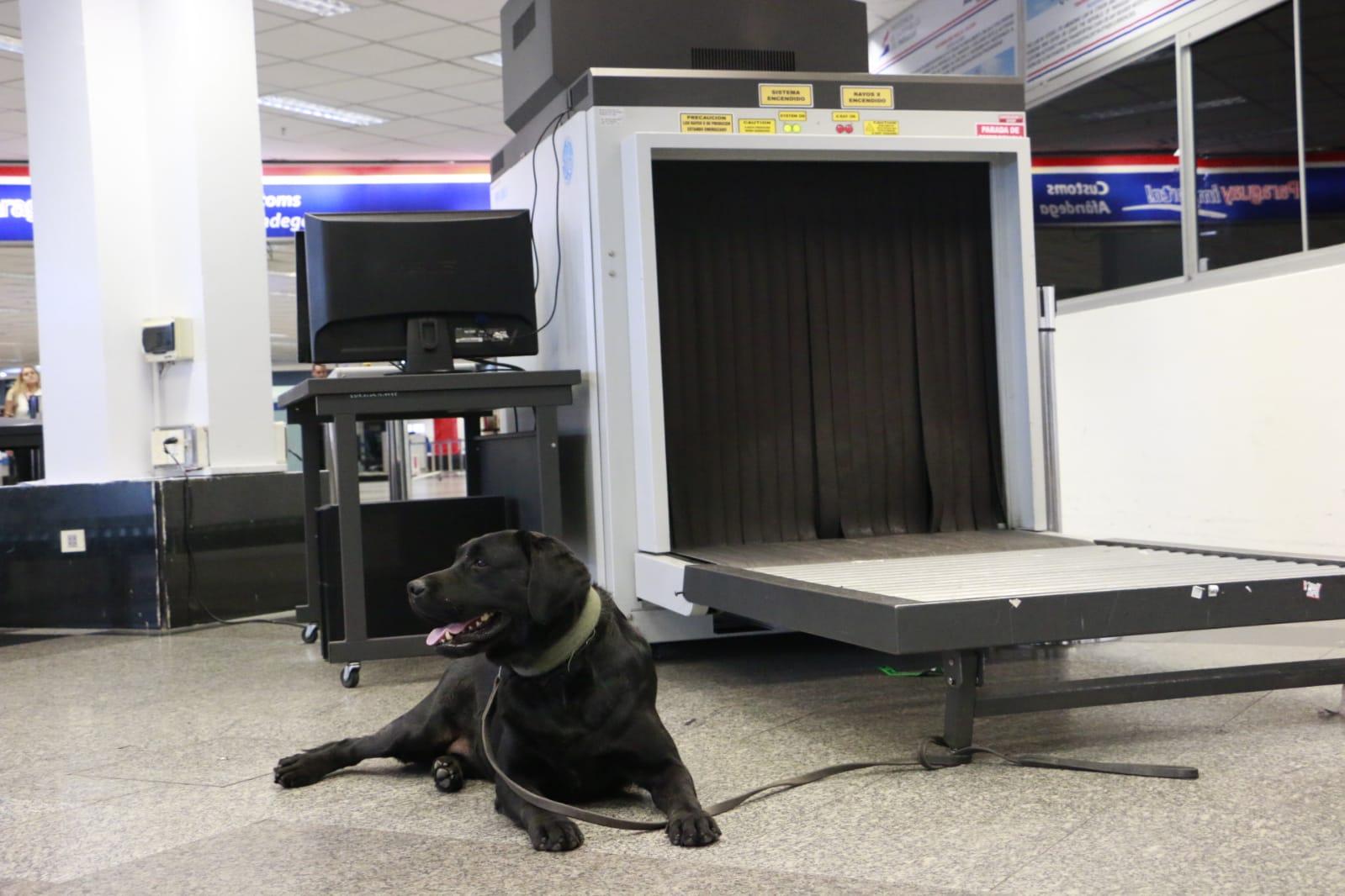 """""""Rocky"""" ayuda a incautar cerca de 8 kilos de cocaína en Aeropuerto Silvio Pettirossi."""