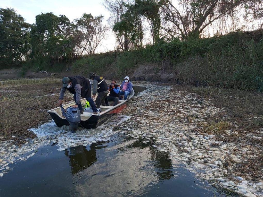 Investigan mortandad de peces en río Montelindo Villa Hayes