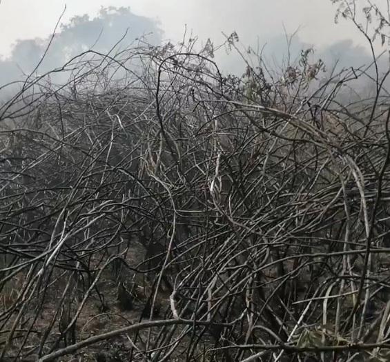 Humareda en Asunción se debe a quemazones