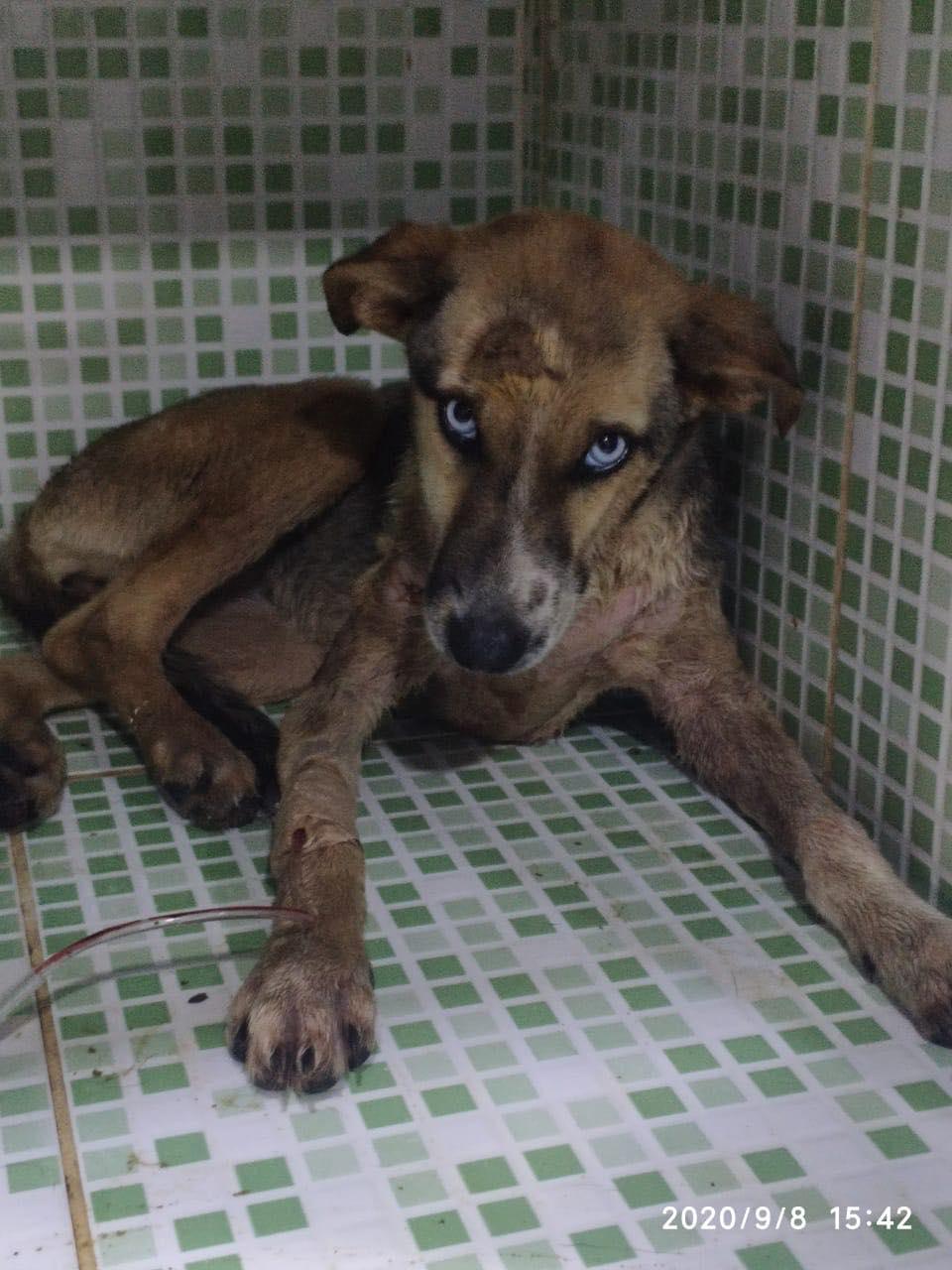Rescatan cachorra en Itacurubí de la Cordillera e imputan a mujer que faenaba perros para consumo