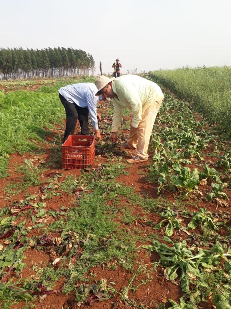 FNC: Alrededor de 240 mil familias campesinas afectadas en su producción por la sequía