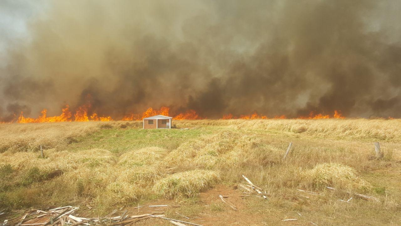 """Titular de INFONA exige """"castigos judiciales ejemplares"""" contra quienes cometen incendios forestales"""